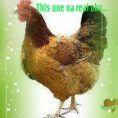 D bigest fowl