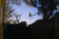 window spider