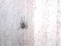 My pet spider