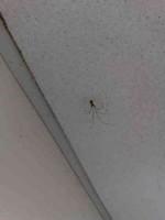 Recording Studio Spider