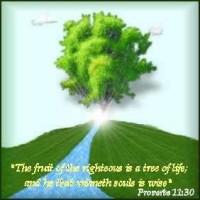 Porverbs 11:30