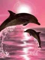 Dolphins.''pink bakground