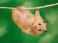 Lil mouse