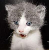 Surprised~cat