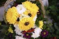 Puppy~flowers