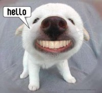 hello~dog