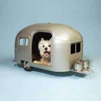 Caravan~dog