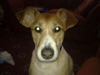 my dog again-biggzy