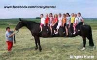 long horse