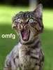 omfg cat